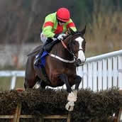 Our Conor best racehorse wins
